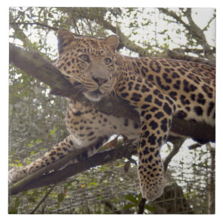 Jaguar 0151 azulejo