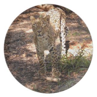 Jaguar 1008 pratos de festas