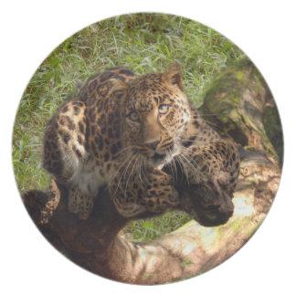 Jaguar 1012 prato de festa