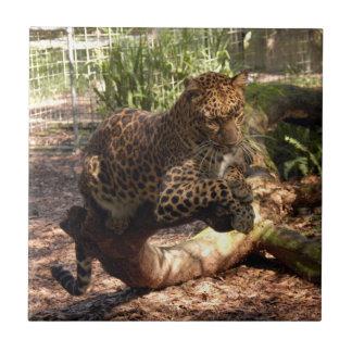Jaguar 1015 azulejos
