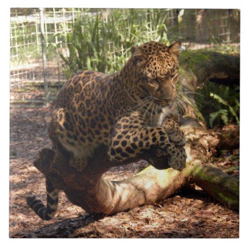 Jaguar 1015 azulejo de cerâmica