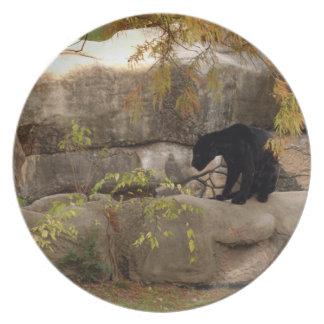 jaguar-1 louças de jantar