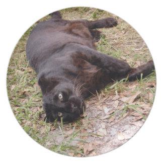 Jaguar 3524 prato