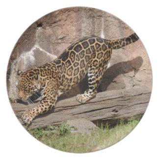jaguar-4 prato de festa