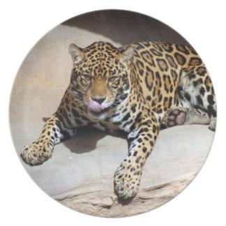 jaguar-5 prato de festa