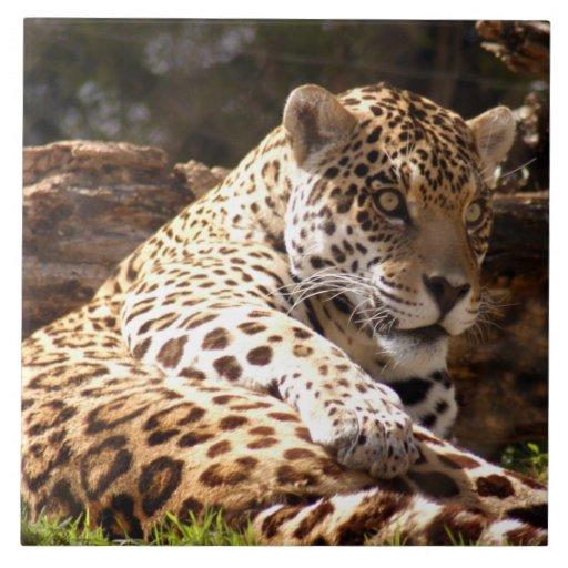 jaguar-6 azulejos