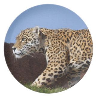 jaguar-8 louça de jantar
