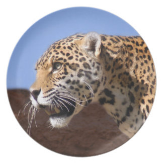 jaguar-9 prato