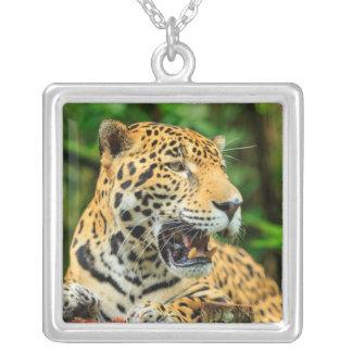 Jaguar mostra seus dentes, Belize Colar Banhado A Prata