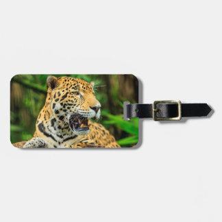 Jaguar mostra seus dentes, Belize Etiqueta De Bagagem