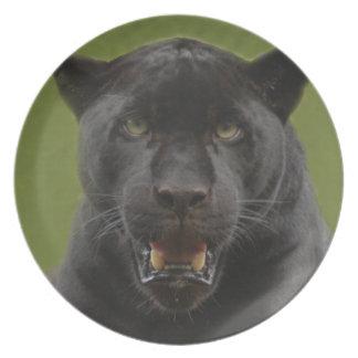 jaguarblack10x10 louças de jantar