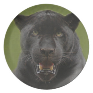 jaguarblack10x10 pratos