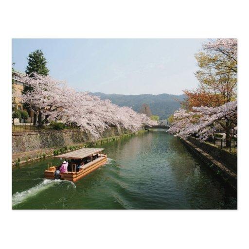 Japão, Kyoto. Visão da flor no barco Cartao Postal