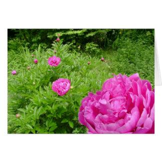 Jardim cor-de-rosa da peônia cartão comemorativo