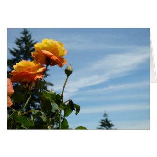 Jardim de rosas do verão dos cartões do céu azul