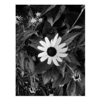 Jardim preto e branco cartão postal