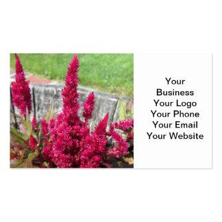 Jardim rústico vermelho da cerca do Celosia Modelos Cartão De Visita