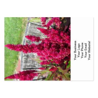 Jardim rústico vermelho da cerca do Celosia Cartão De Visita Grande