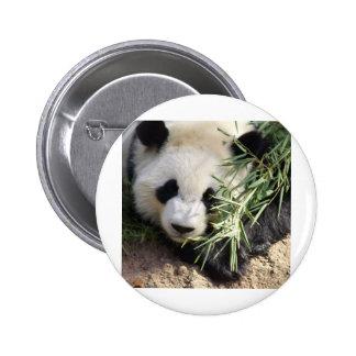 Jardim zoológico Atlanta do urso de panda @ Bóton Redondo 5.08cm