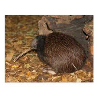 Jardim zoológico legal de Auckland do quivi @ Cartão Postal