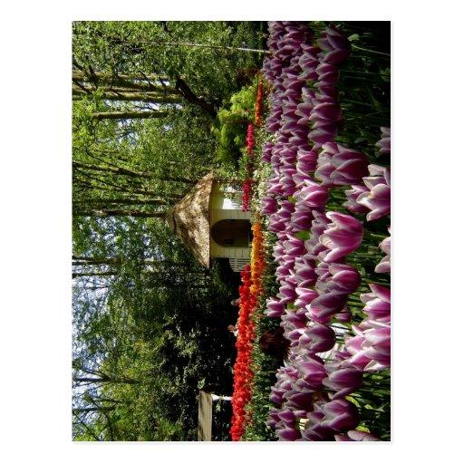 Jardins da tulipa de Keukenhof da descrição sumári Cartão Postal