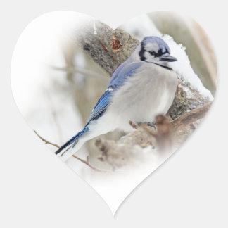 Jay azul na neve do inverno adesivo coração