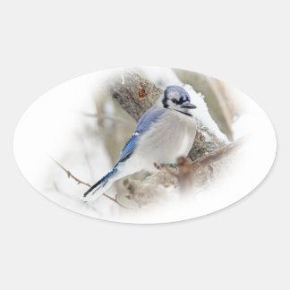 Jay azul na neve do inverno adesivo oval