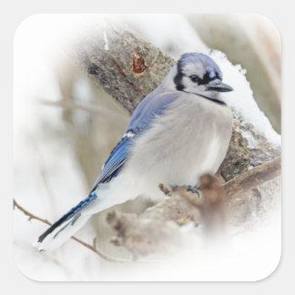 Jay azul na neve do inverno adesivo quadrado