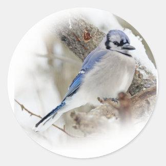 Jay azul na neve do inverno adesivo redondo