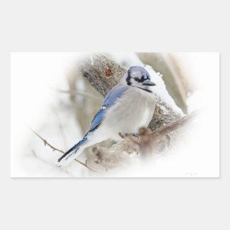 Jay azul na neve do inverno adesivo retangular