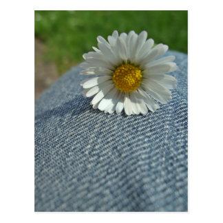 Jeans flor cartão postal