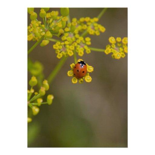 Joaninha na flor amarela convite personalizado