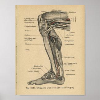 Joelho do pé do impressão da anatomia do alemão do