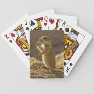 Jogo De Baralho Cão de pradaria que come, arizona do bebê