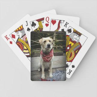 Jogo De Baralho Cartões de jogo amarelos da foto do cão do