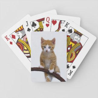 Jogo De Baralho Foto engraçada do Gym do gatinho bonito do gato do