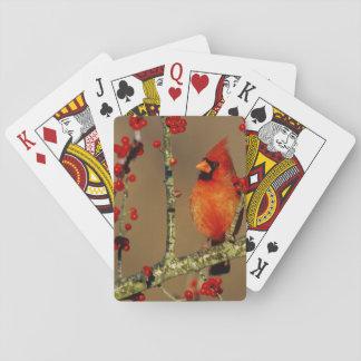 Jogo De Baralho Homem cardinal do norte empoleirado, IL