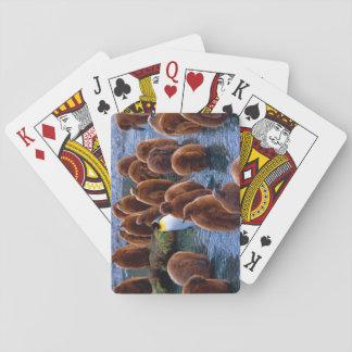Jogo De Baralho Rei pinguim com pintinhos - cartões de jogo