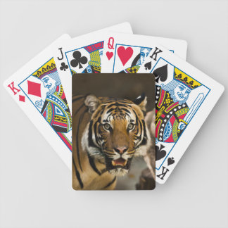 Jogo De Baralho Tigre Siberian