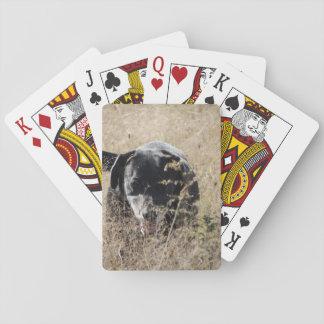 Jogo De Carta Cão no campo
