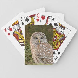 Jogo De Carta Cartões de jogo da coruja barrada