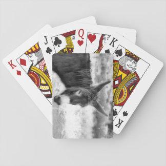 Jogo De Carta Cartões de jogo do asno