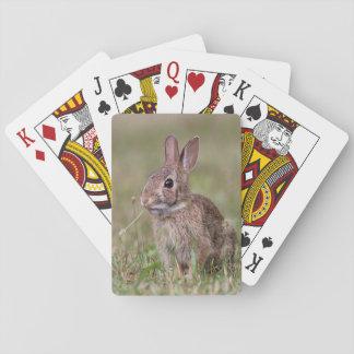 Jogo De Carta Coelho de coelho
