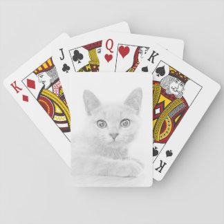Jogo De Carta Fotografia BONITO SUPER do retrato do gatinho