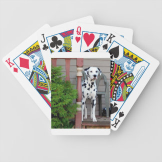 Jogo De Carta Kevin o Dalmatian