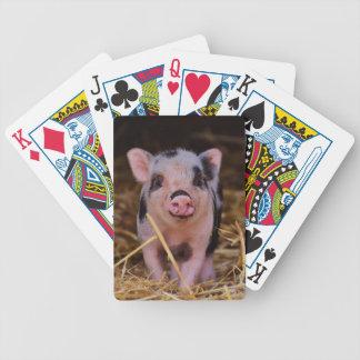 Jogo De Carta mini porco