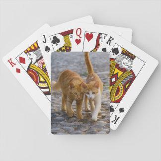 Jogo De Carta Os gatinhos bonitos de Companioned andam a mesma