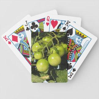 Jogo De Carta Tomates verdes que penduram na planta no jardim