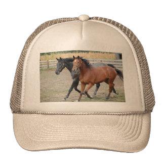 Jogo do cavalo boné