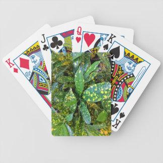 Jogos De Baralho Planta do Croton